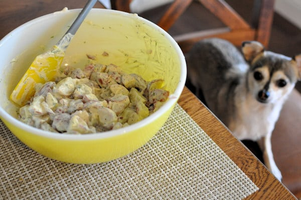 Red Potato Salad being mixed with a chihuahua watching