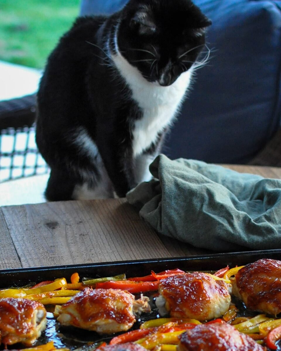 a cat looking down on a pan of cooked chicken thighs