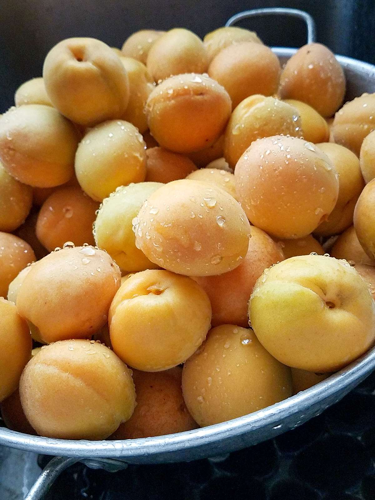fresh rinse apricots draining in a colander